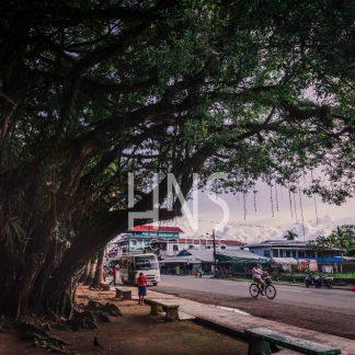 Panama Bocas del Toro Park