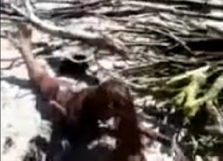 Picture about Dead Mermaid at Balambangan Island - Video