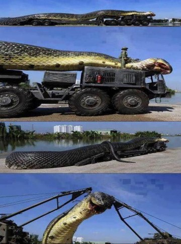 Picture about Amazing Giant Snake Found in Red Sea