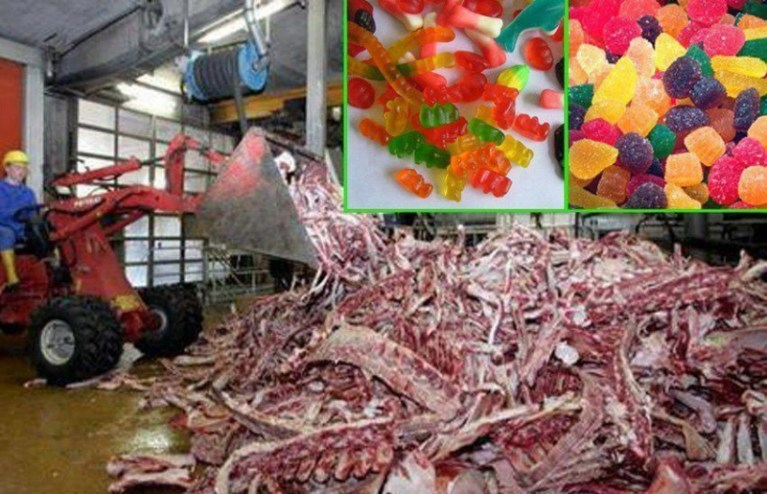Picture about: Facts about what Gummy Candies are Made of