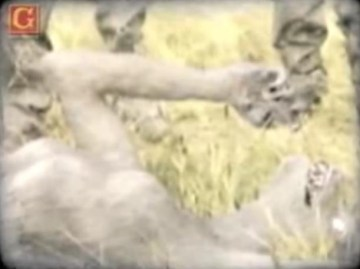 Picture about Real Werewolf Caught and Killed by German Soldiers, Video