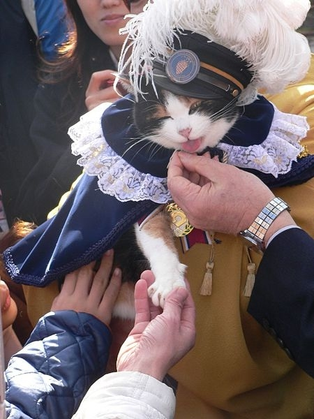 Picture: A Cat in Japan becomes Super Station Master