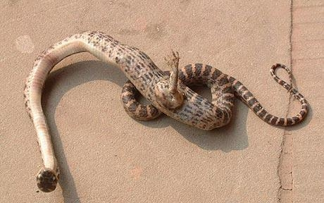 Picture of Snake with a Foot Found in China
