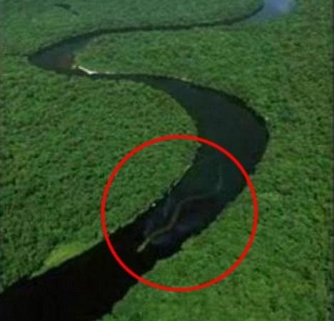World's Biggest Snake of 100 Feet found in Amazon River Basin – Facts Analysis