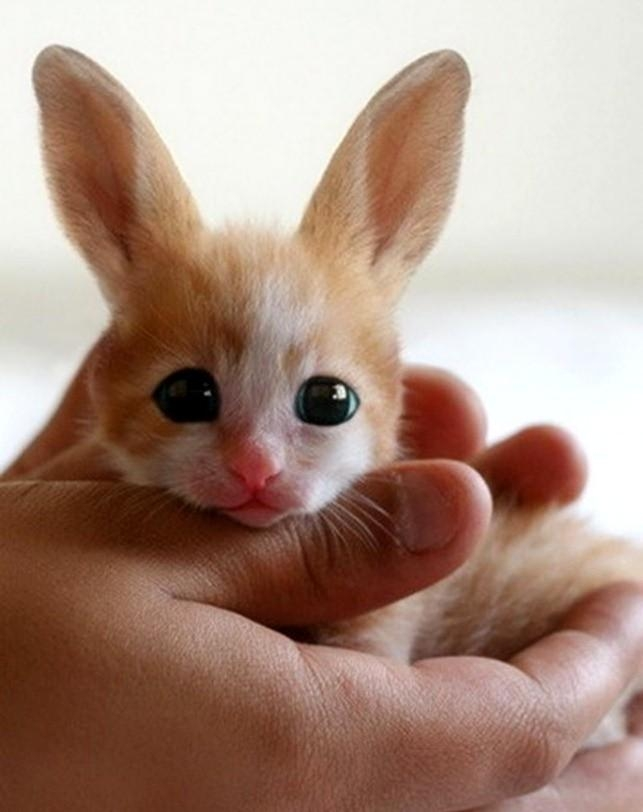 Picture about Fennec Hare, World's Most Endangered Creature
