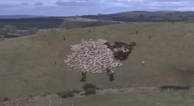 Picture about Extreme Sheep LED Art Video