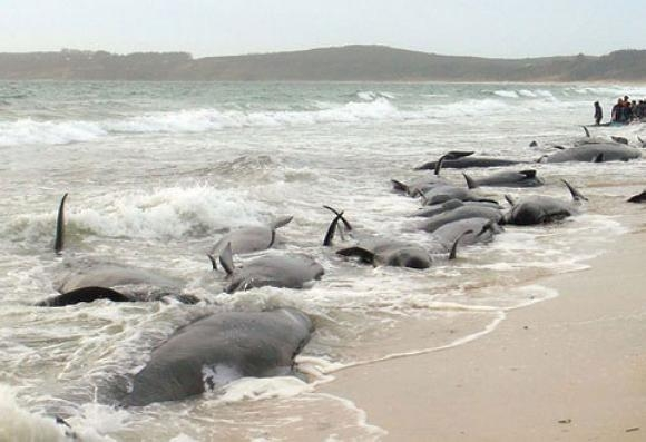 Picture about Fukushima Disaster Leaves Hundreds of Whales Radiated to Death