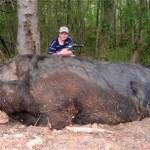 Picture about Alabama Boy Kills 1,051-Pound Monster Pig, Bigger than 'Hogzilla'
