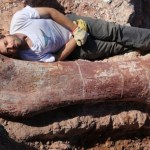 Fossil Picture: Biggest Dinosaur Ever Discovered in Argentina