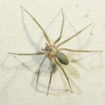 Picture about Dangerous New Spider in Australia