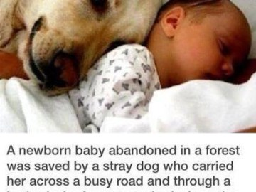 Picture about Abandoned New Born Baby Saved by Stray Dog