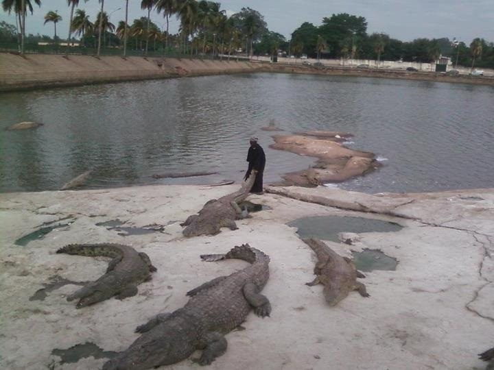 Picture from Video of Crocodile Feeder Eaten by His Crocodiles