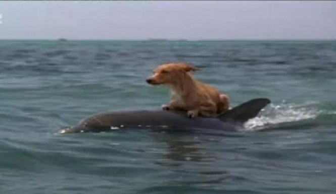 Dolphins Help Save Dog from Drowning – Facts Analysis