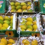 Picture about America and European Countries Banned Indian Mangoes on Pretexts of Being Poisonous
