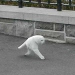 Picture Suggesting Google Street View Captures Two Legged, Half Cat