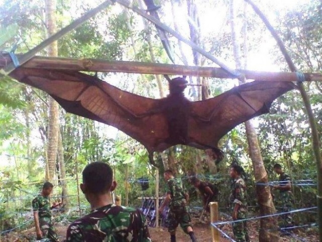Picture Suggesting Human Size Giant Bat Caught in Philippines