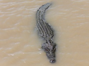 Picture Suggesting Crocodiles Escaped into Flood Waters of Chennai