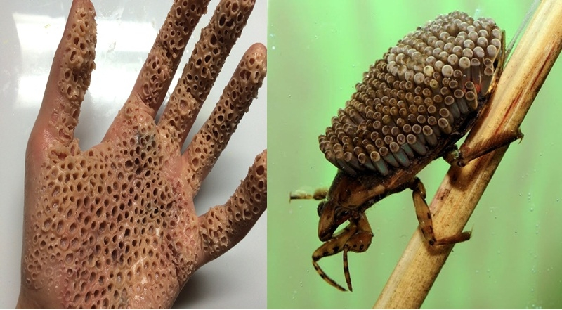Touching This Insect With Bare Hand Will Infect Virus Facts