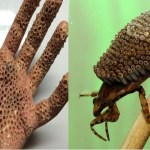 Picture Warning Touching This Insect With Bare Hand Will Infect Virus