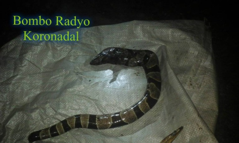 Picture about A Woman in Philippines Gave Birth to a Live Snake