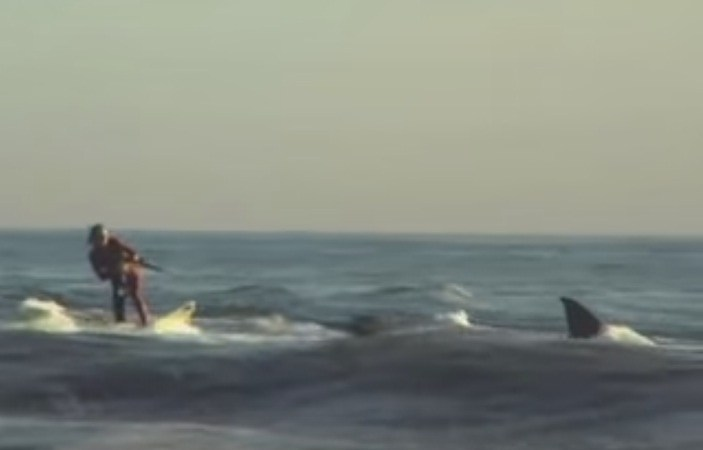 Video of Surfer Towed by Great White Shark: Fact Check