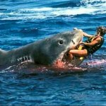 Picture about Hero Uncle Wrestled 7 Foot Bull Shark to Save Nephew's Severed Arm in 2001