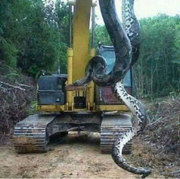 Picture Suggesting 33-Ft Long, 400-Kg Massive Anaconda Discovered by Construction Workers in Brazil
