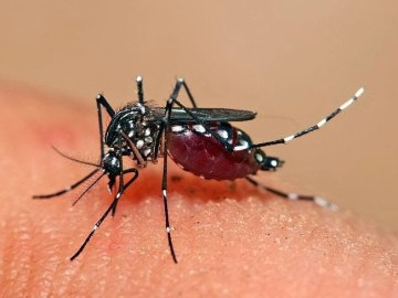 Picture Suggesting Dengue Protection, Apply Coconut Oil Below Knees Till Feet
