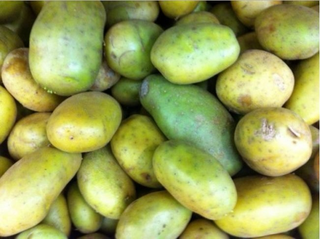 Picture of Green Potatoes Poisonous