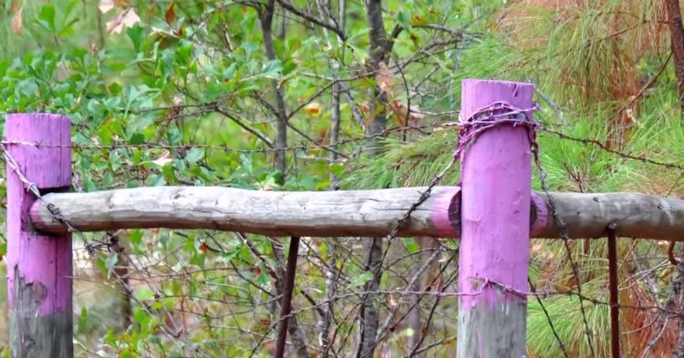Picture about Purple Paint on Fence Posts, Warning to Get Away Immediately