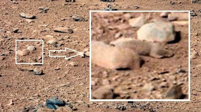 Squirrel/Rodent/Lizard on Mars Pictures of Curiosity Rover: Facts