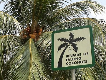 Picture Suggesting Falling Coconuts Kill More People than Shark Attacks