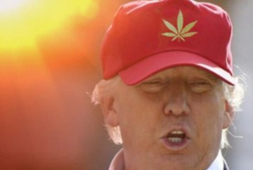 Picture Suggesting Donald Trump Will Legalize Marijuana in All 50 States