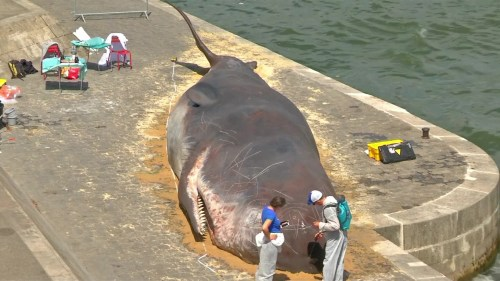 Picture of 'Scientists' examining the 'Beached Whale'