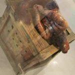 Picture about Strange Alien Fish Found in Vizag Beach