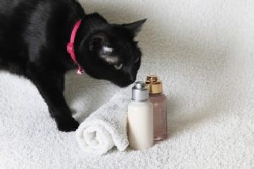 Picture about Essential Oils Toxic to Cats