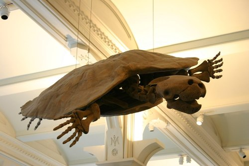 Picture: Stupendemys Geographicus Skeleton at American Museum of Natural History