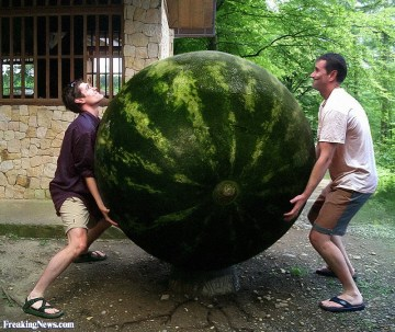 World's Largest Watermelon Picture