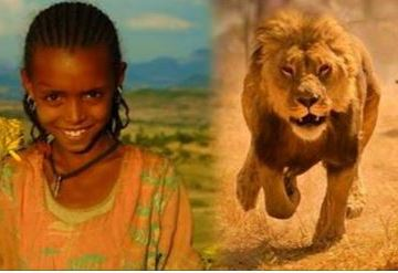 Picture about Lions Saved Kidnapped Ethiopian Girl
