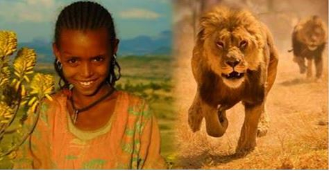 Lions Save Kidnapped Ethiopian Girl: Fact Check