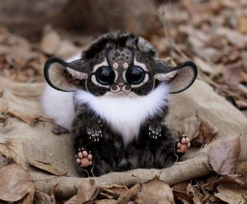Image about Inari Fox/Southeast African Monkey from Madagascar