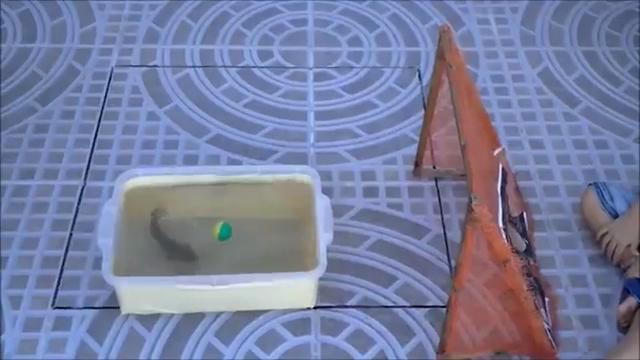 Image of Fish Flips Ball to Score Goal: Video