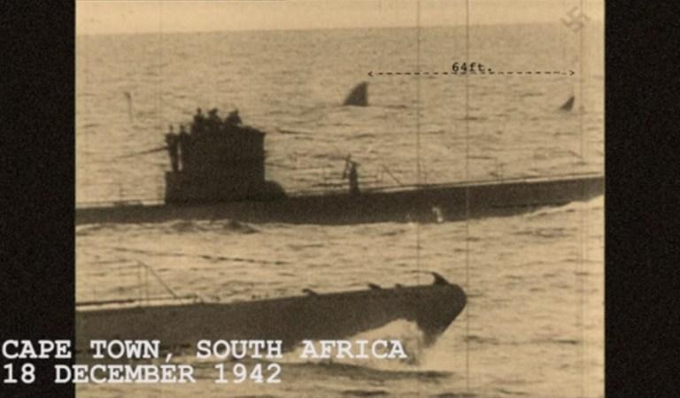 64-Foot Megalodon Shark Swimming Behind Nazi U-Boats: Fact Check