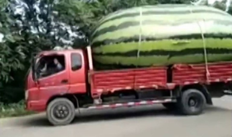 Image from Lorry Loads Giant Watermelon, Video