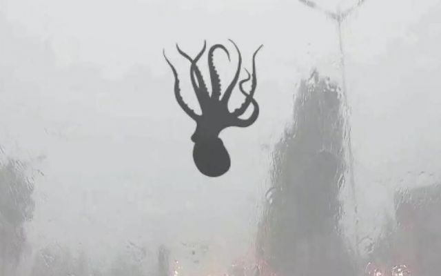 Image about Octopus Fell from Sky During Tornado in China