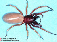 Image about New Deadly Spider Spreads Across USA, Killed Five