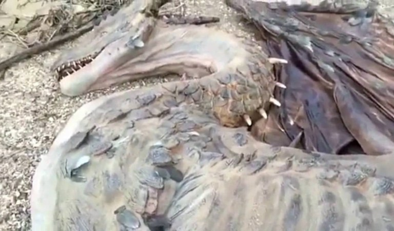 Man Found Dead Dragon on Remote Island, Video: Fact Check