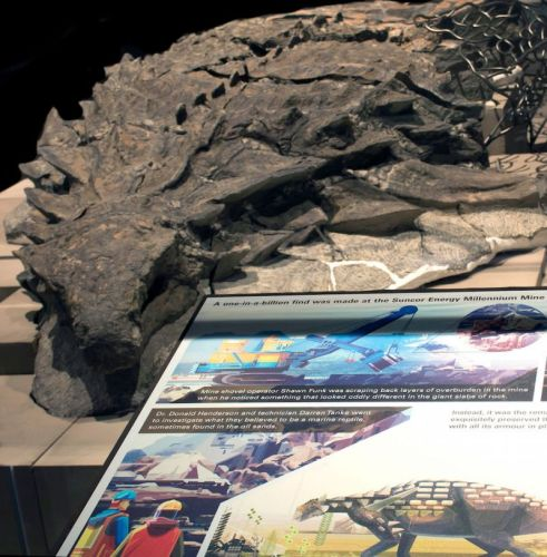 Image of Amazing Picture of Mummified Dinosaur in Canada Museum