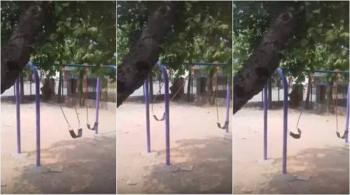 Images about Real Ghost Caught Swinging in Delhi Park