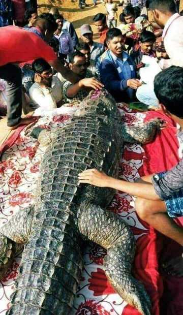 Image about Kerala Lake Temple's Crocodile Babia Died